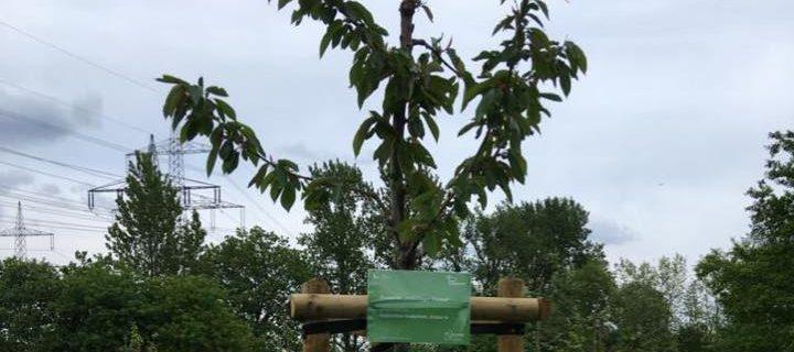 Neues vom Baum der 7c
